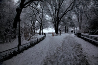 Another NYC Snow Event-Central Park